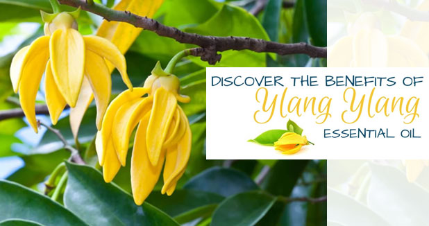Ylang-Ylang Essential Oil For Hair Care